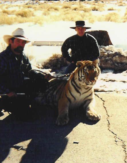 Montgomery Pass Tiger