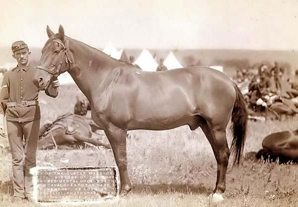 comanche-the-only-survivor-of-the-custer-massacre-1876