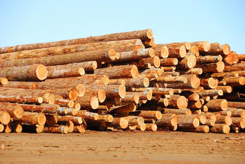 log-deck-25637444