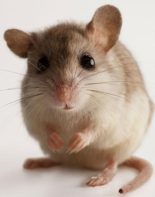 A-mouse-1028634.jpg