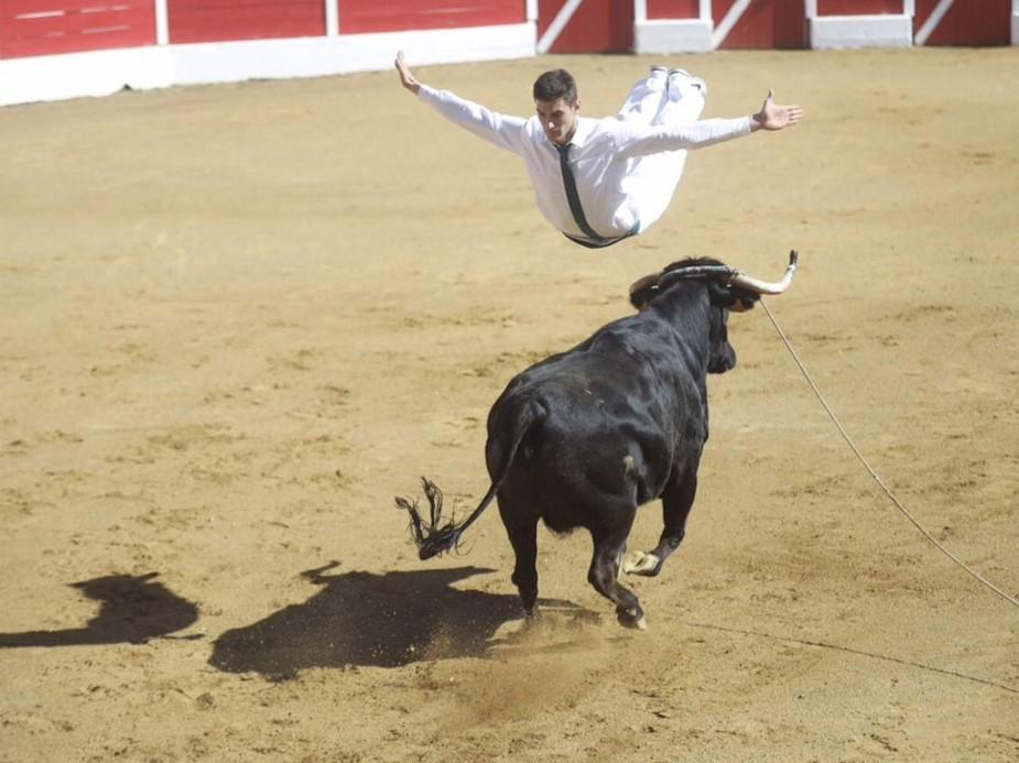 Bull-flying.jpg